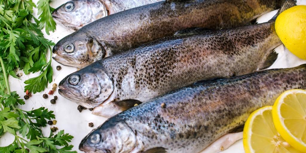 Speciální rybí víkend